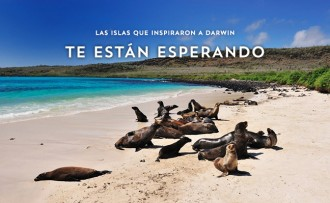 Galapagos-tortugas-rockinchiclifestyle