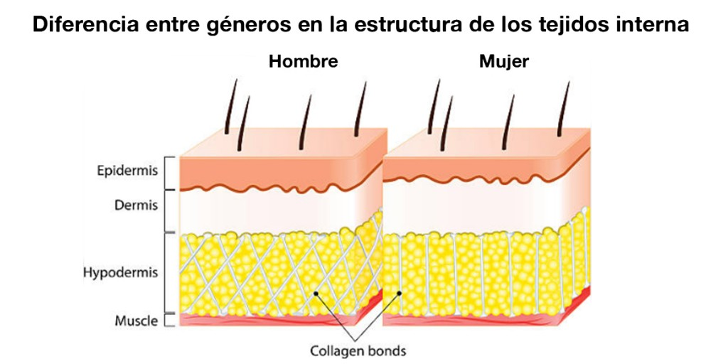guia-definitiva-celulitis-tejidos-internos-masculino-femenino